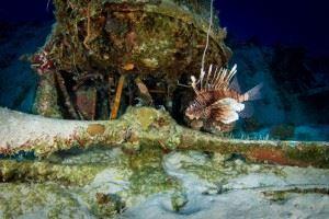 Lionfish on the Corsair - WWII Airplane Graveyard (Credits: Brandi Mueller for Argunners)