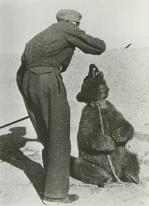 Polish soldier with Wojtek in Iran 1942.