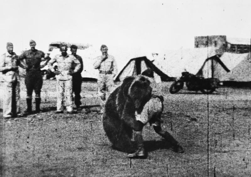 Troops of the Polish 22 Transport Artillery Company (Army Service Corps, 2nd Polish Corps) watch as one of their comrades play wrestles with Wojtek (Voytek) their mascot bear during their service in the Middle East.