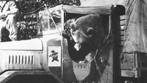 Corporal Wojtek - Bear