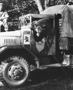 Corporal Woytek sitting in the front of a Company's supply truck.