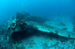 Wreck of Betty Plane in Truk Lagoon (Credits: Brandi Mueller)