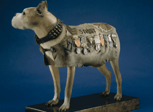 Stubby wearing his coat and collar at the Smithsonian Institution.