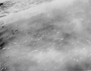 Aerial photo of the numerous Allied naval craft off 'Dog' and 'Easy' beaches, Omaha assault area