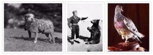 Top 5 Animals To Make Military Appearances