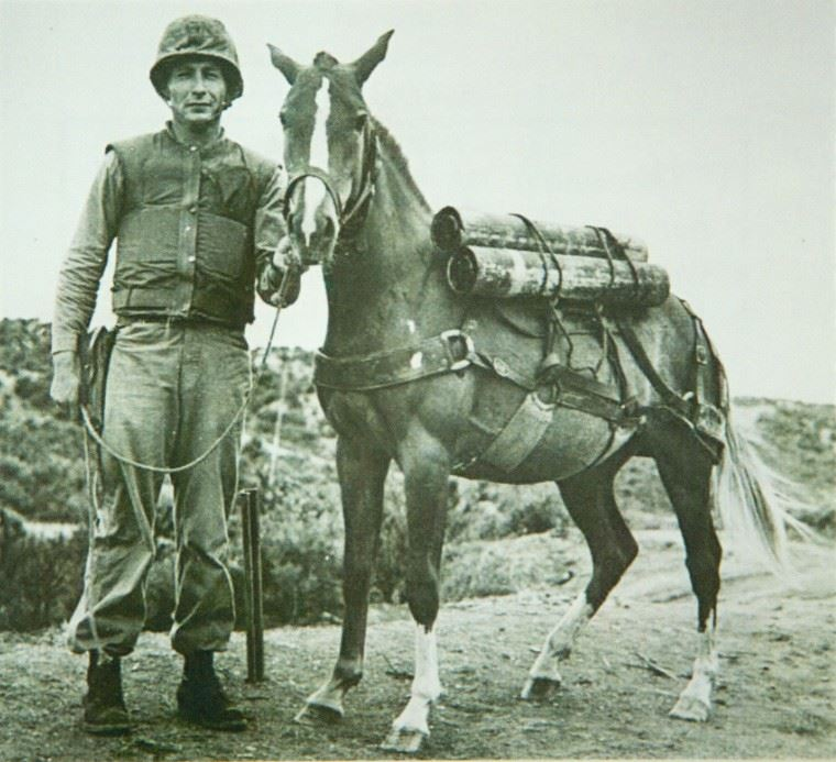 Sergeant Reckless with her trainer.