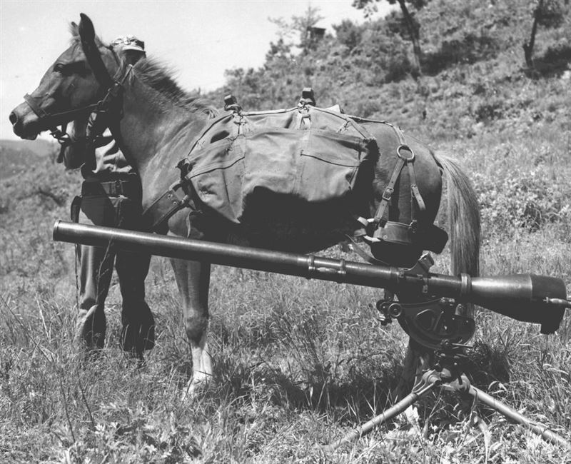 Sergeant Reckless pictured beside a 75mm recoilless rifle